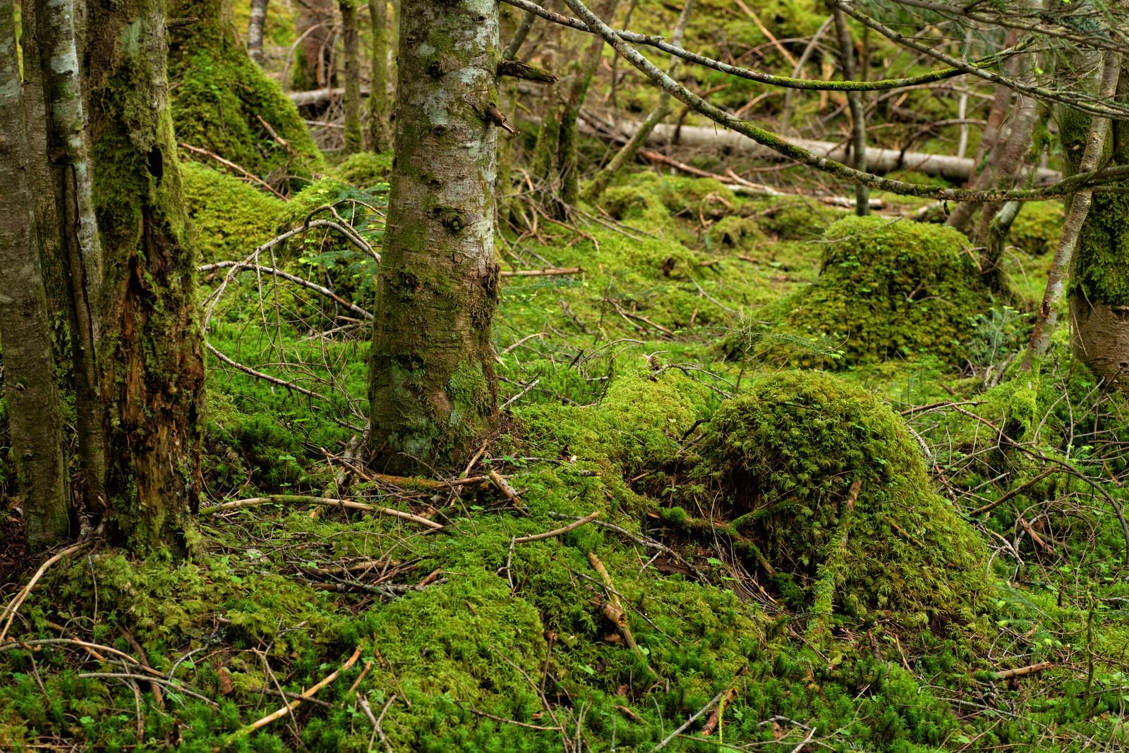 「苔生した森の様子」の写真