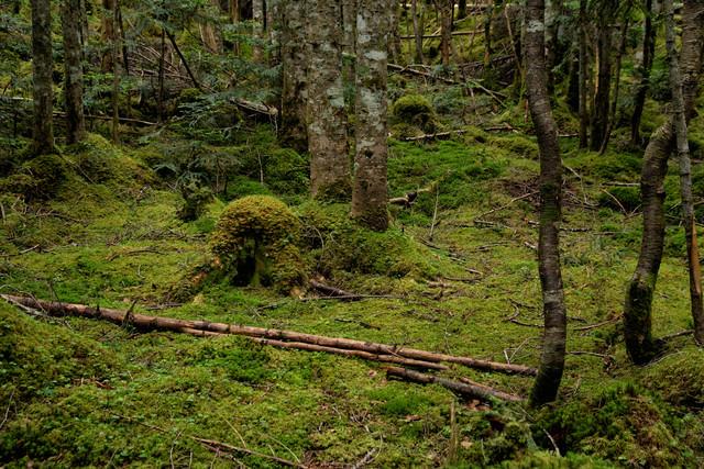 苔生した大地と木々の写真