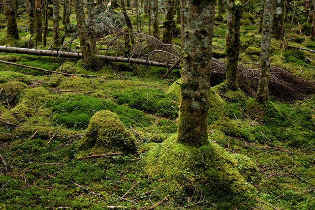 倒木と苔生す森の大地の写真