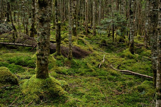 苔生す大地とどこまでも続く森の写真