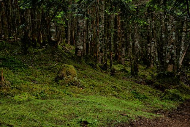 森から広がる苔生す大地の写真