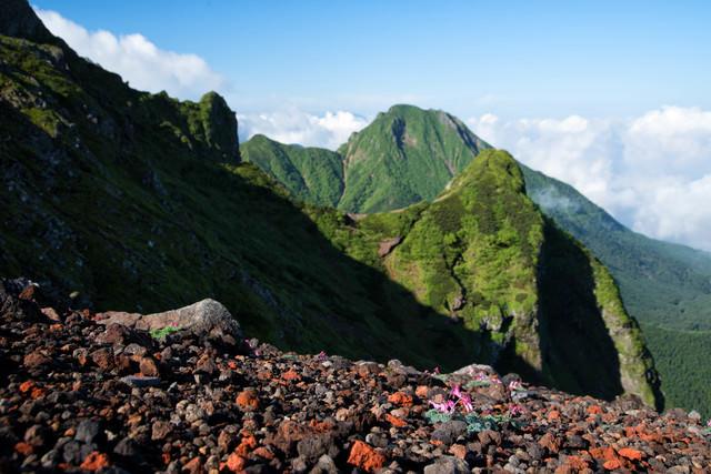 コマクサの群生と阿弥陀岳(八ヶ岳)の写真