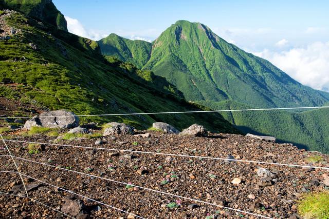 コマクサの群生を守る電気柵と阿弥陀岳(八ヶ岳)の写真