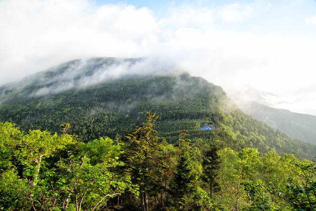 霧に包まれた八ヶ岳の森と本沢温泉の写真