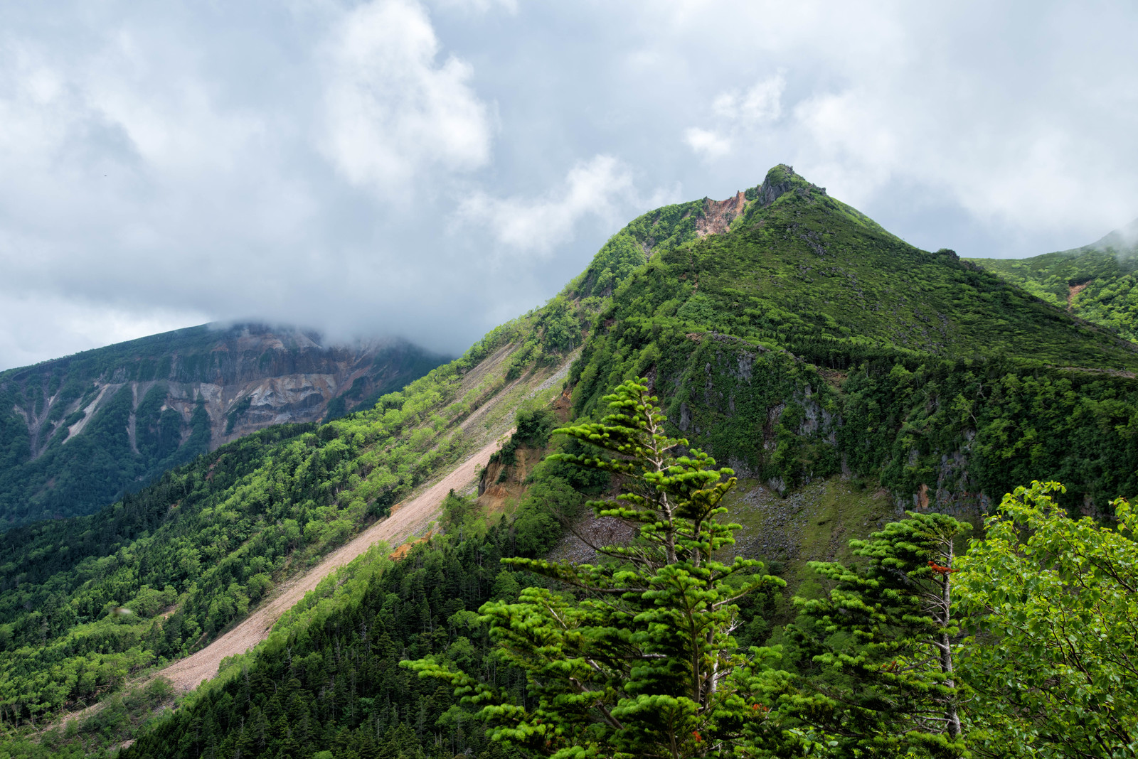 「新緑に覆われた東天狗岳と曇り空(八ヶ岳連峰)」の写真