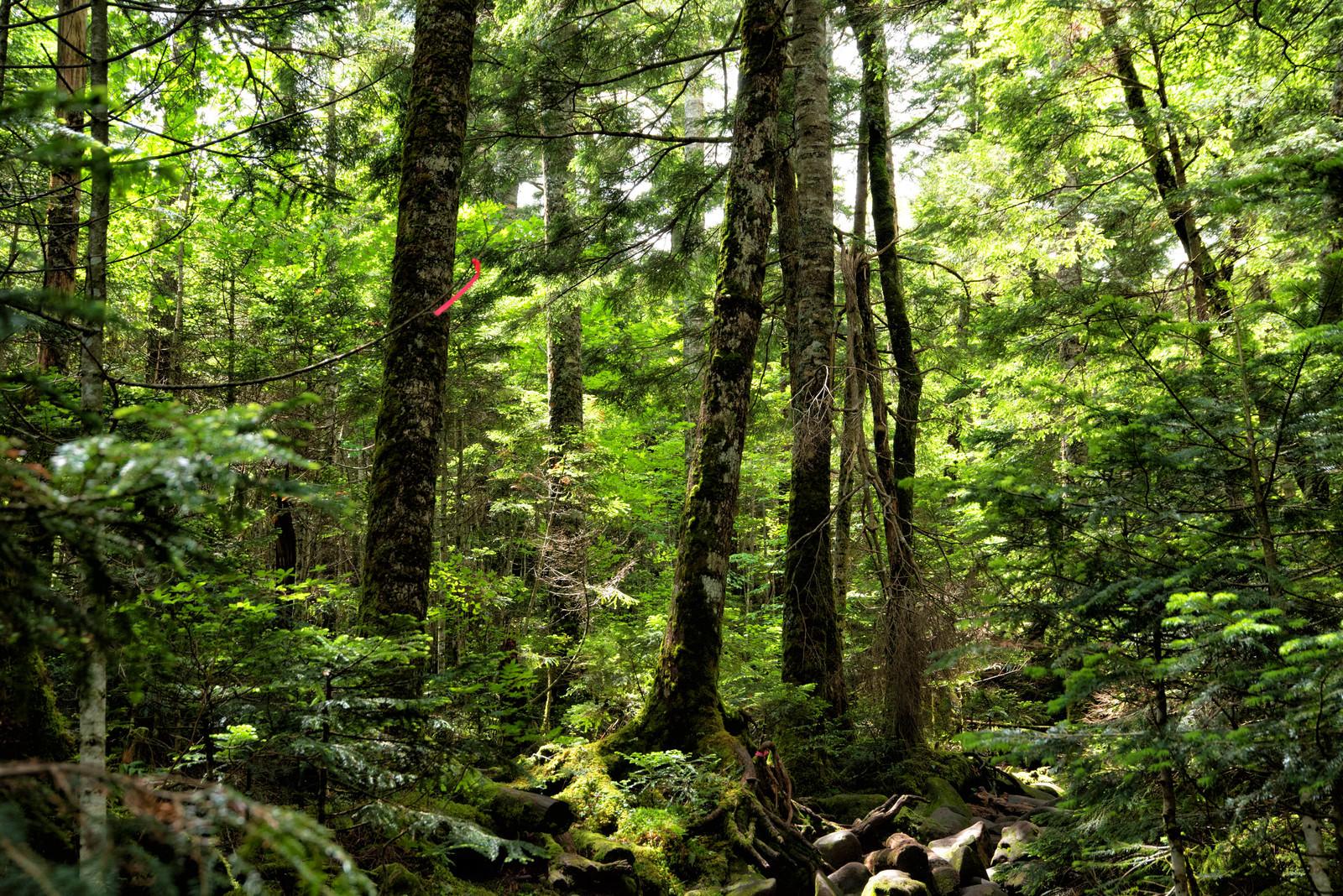 「新緑期の北八ヶ岳の世界」の写真