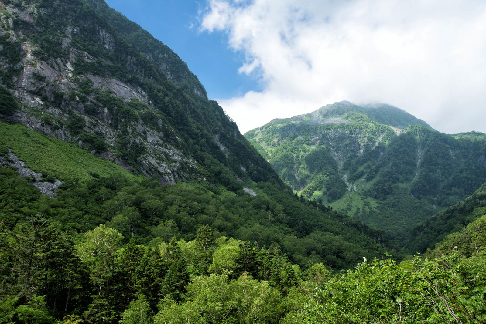 「新緑の美しい本谷と北穂高岳(北アルプス)」の写真