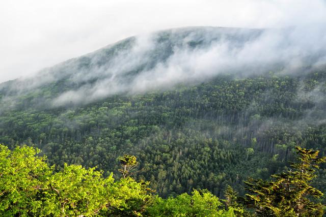 朝靄が流れ行く森の写真