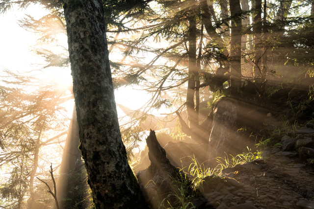森の中に立ち込める朝靄に降り注ぐ朝日の写真