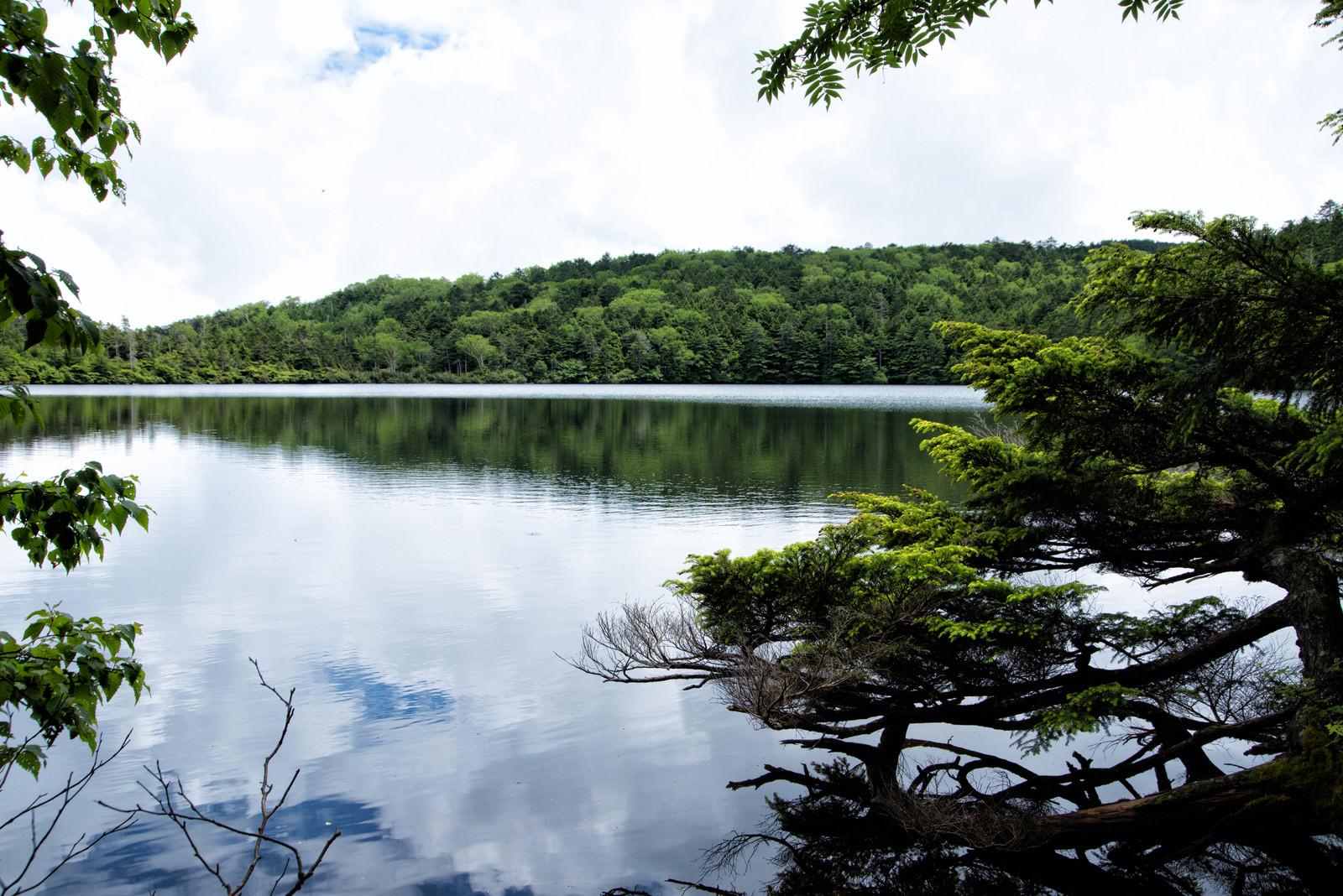 「木々に覆われた白駒の池に映る空(八千代高原)」の写真