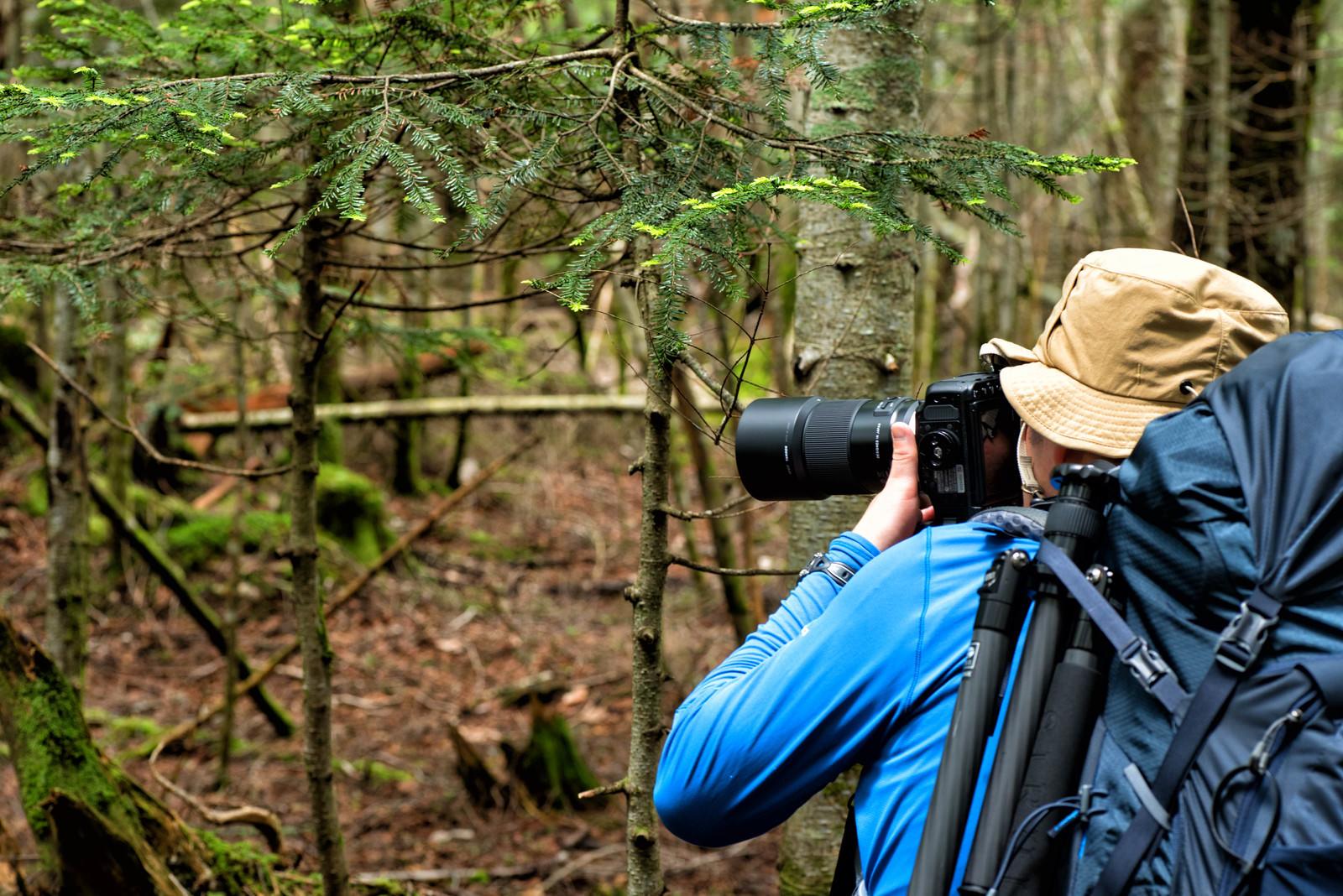 「森の中を撮影する山岳カメラマン」の写真