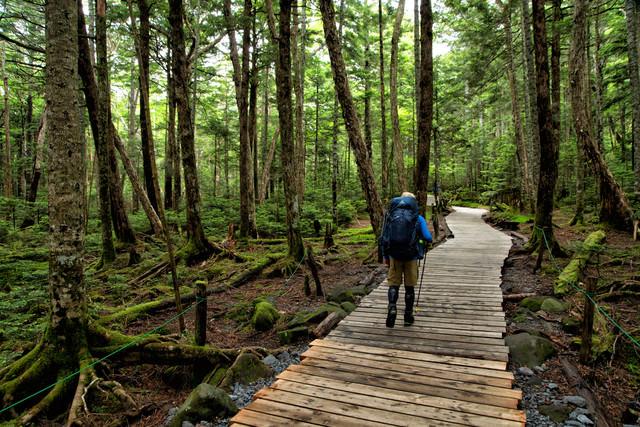 整備された森の木道を散策する登山者の写真