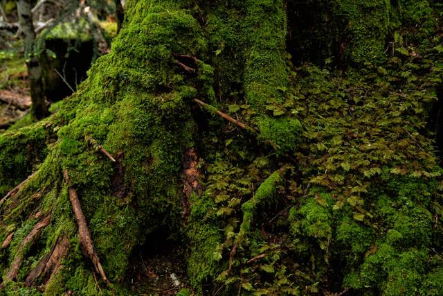 様々な種類の苔の写真