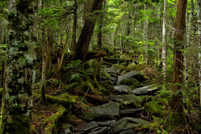 白駒池から高見石山荘へつながる登山道の写真