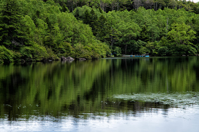 白駒池のリフレクション(八千穂高原)の写真