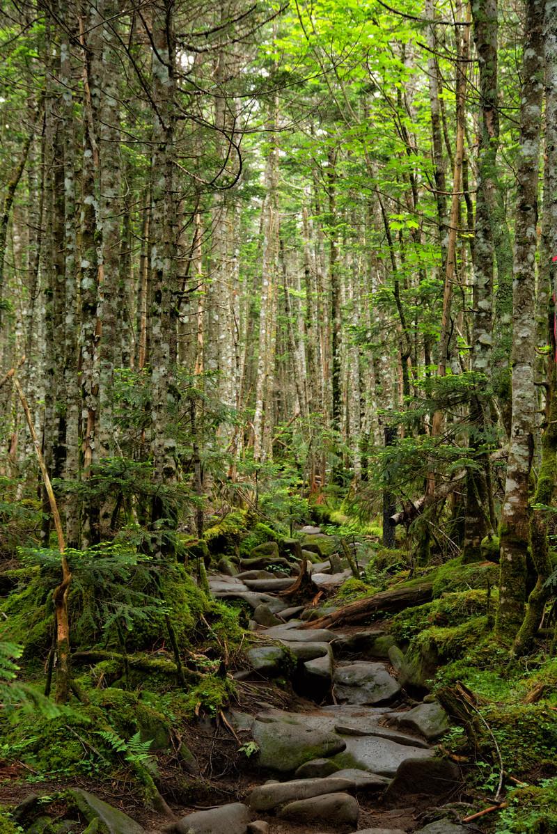 「不揃いな石畳が敷かれた登山道(北八ヶ岳)」の写真