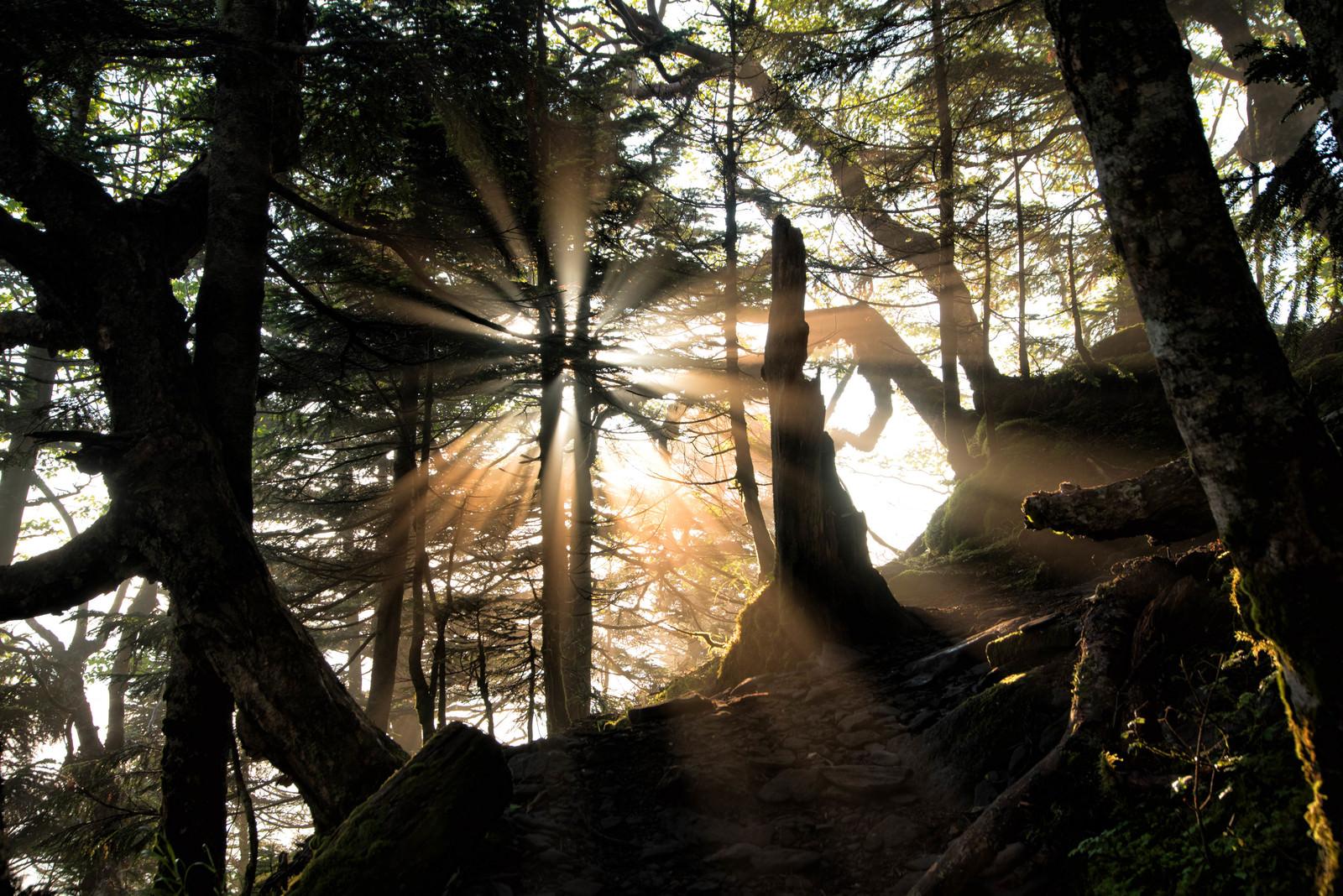 「登山道に差す幻想的な光芒」の写真
