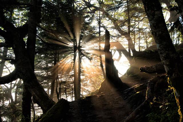 登山道に差す幻想的な光芒の写真