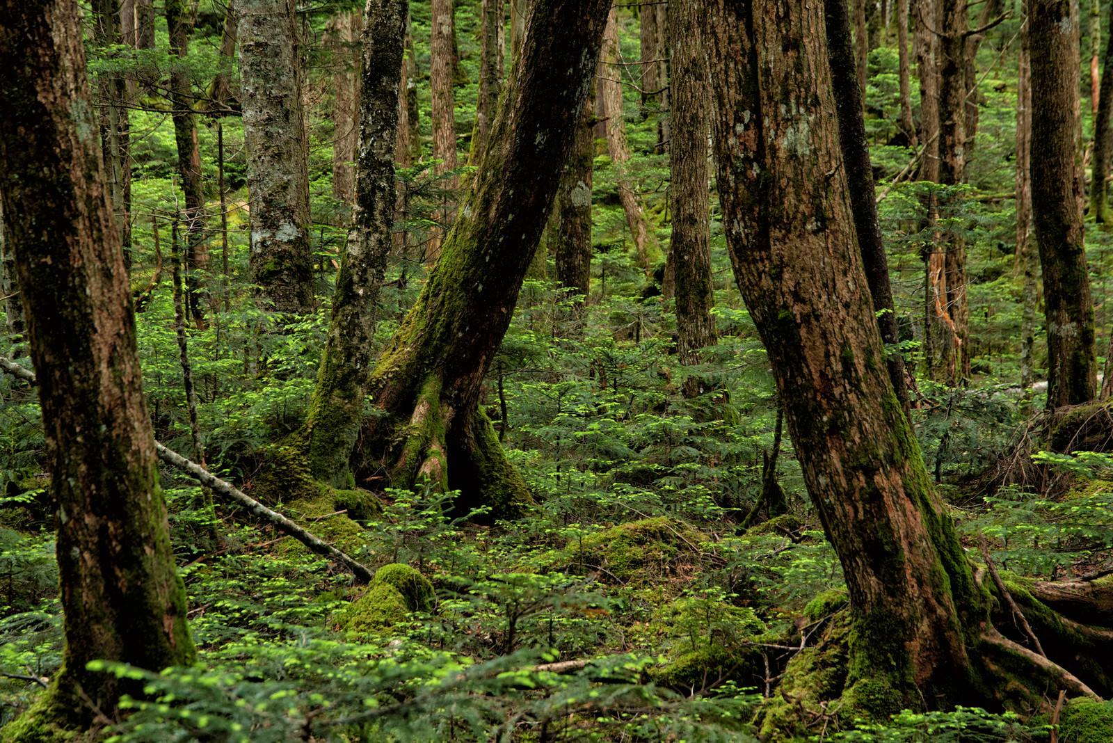 「苔生す木々の世界」の写真