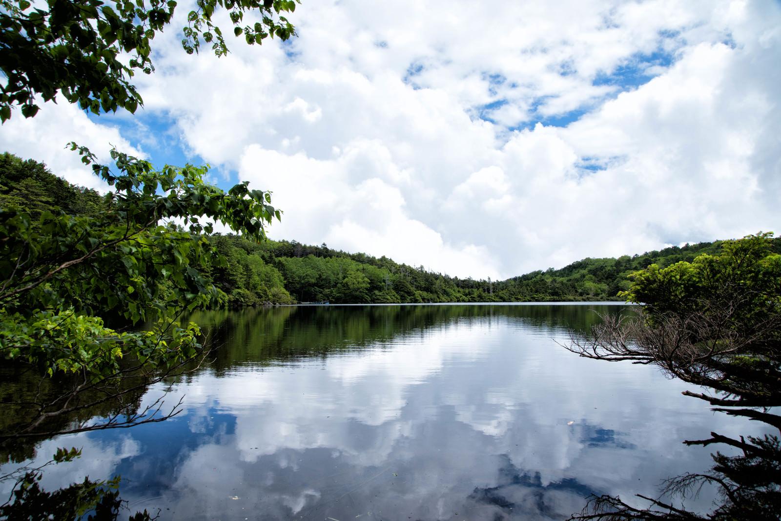 「水面に映る積雲と夏の白駒池(八千穂高原)」の写真