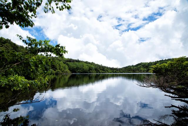 水面に映る積雲と夏の白駒池(八千穂高原)の写真