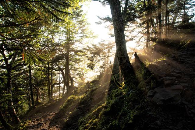美しい朝日に照らされる登山道の写真