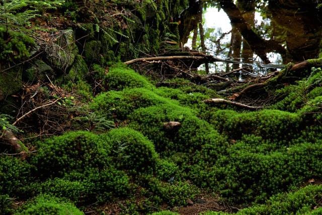 水溜りの周りに繁殖する苔の写真