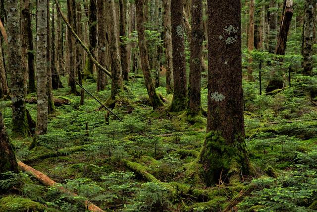 苔の生い茂る森の写真