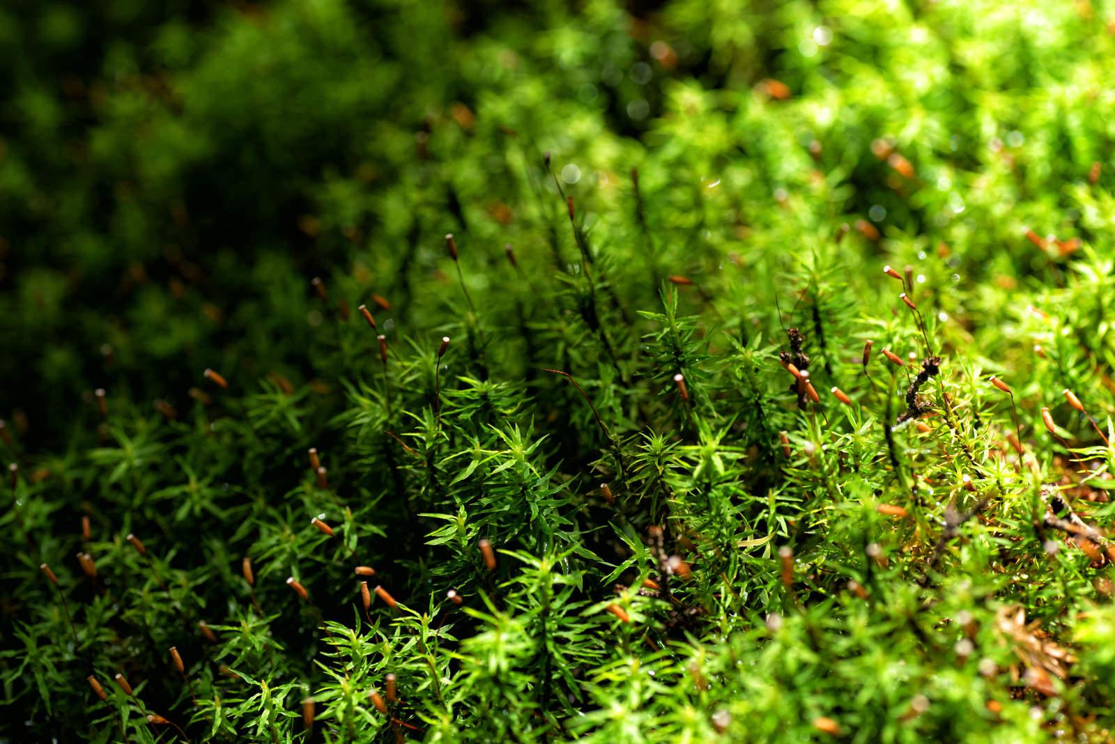 「苔の世界」の写真