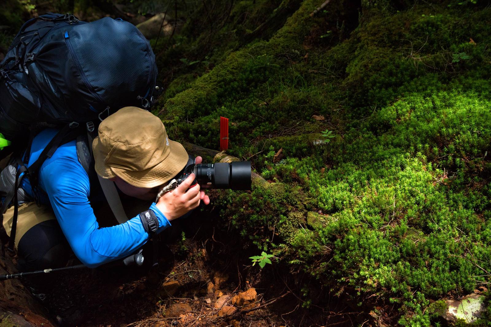 「苔をローアングルで撮影する山岳カメラマン」の写真