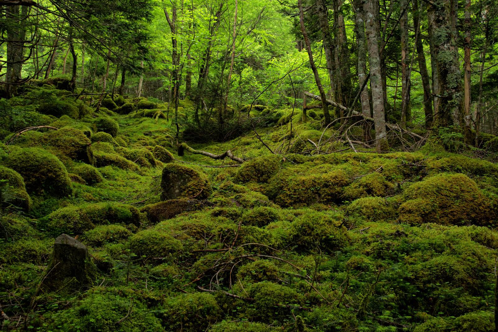 「苔の絨毯で覆われる八ヶ岳(八ヶ岳連峰)」の写真
