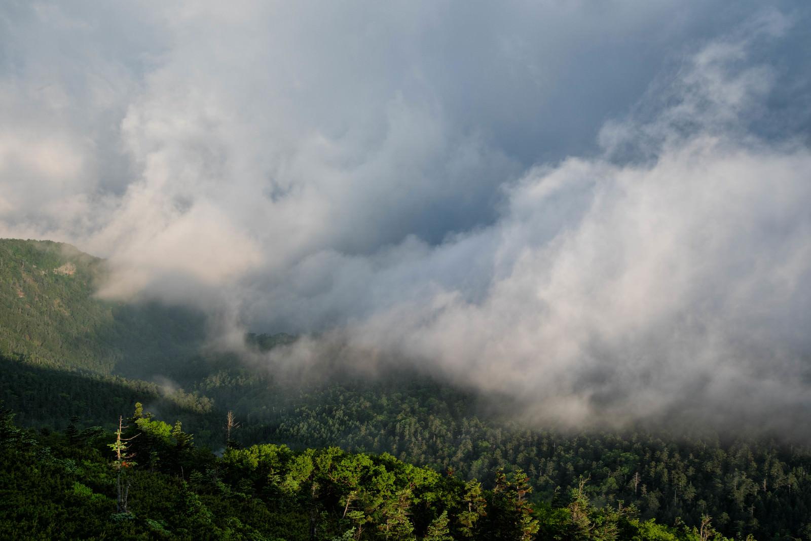 「雲に飲み込まれる森」の写真