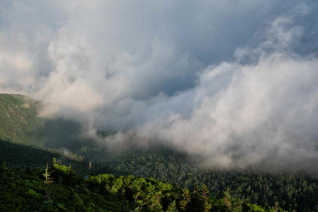 雲に飲み込まれる森の写真