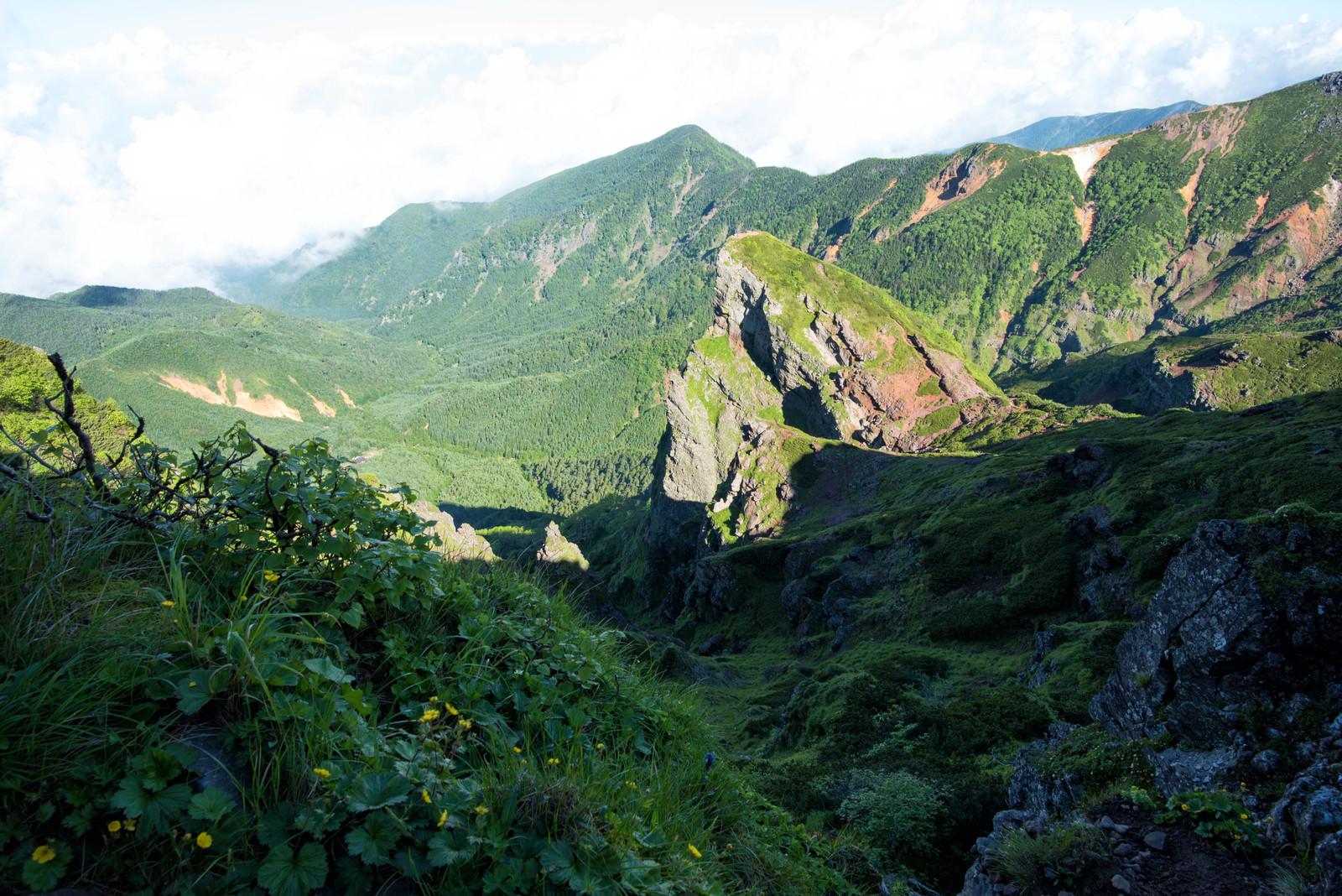 「大同心稜の岩場に育つ高山植物」の写真