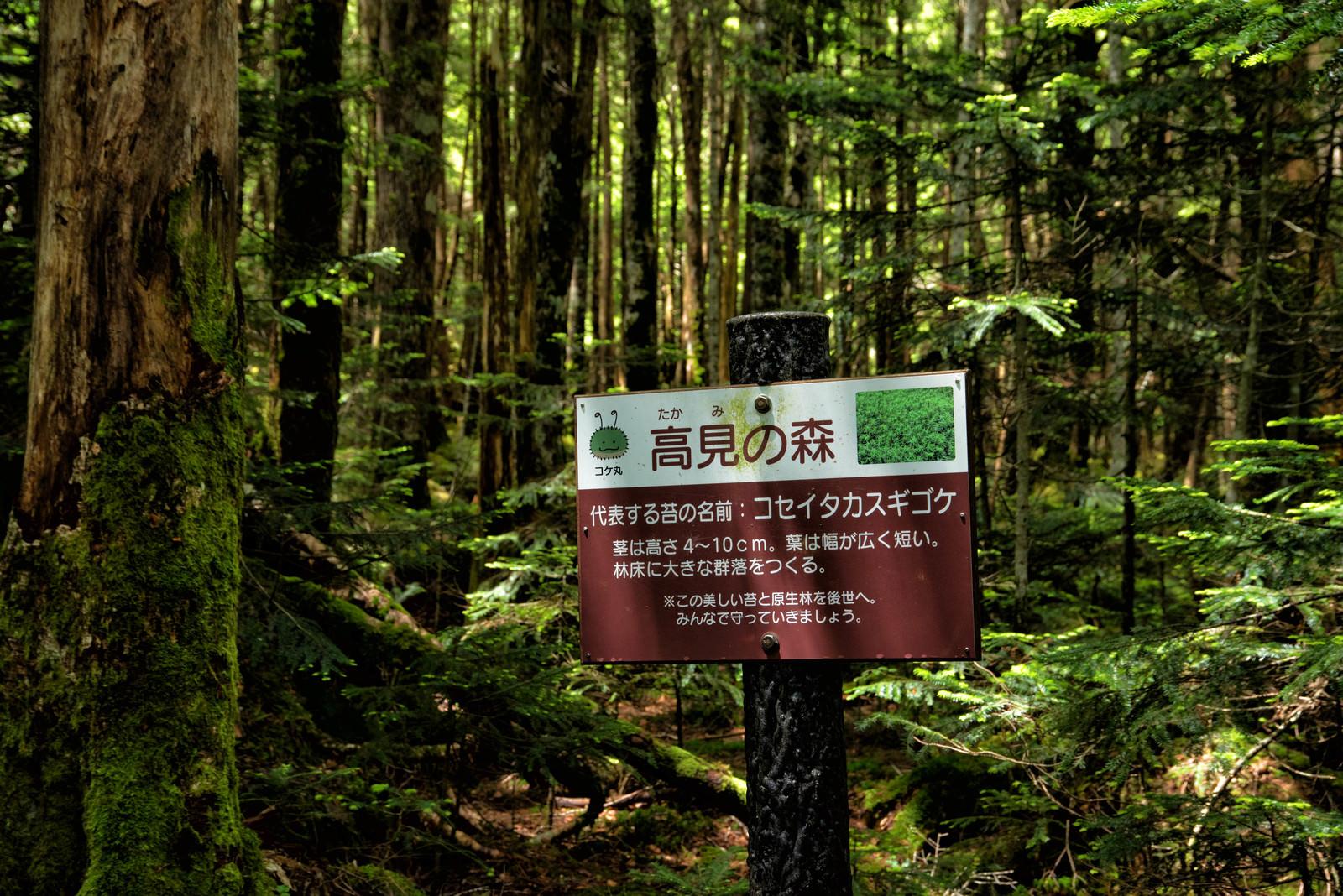 「高見の森の看板」の写真