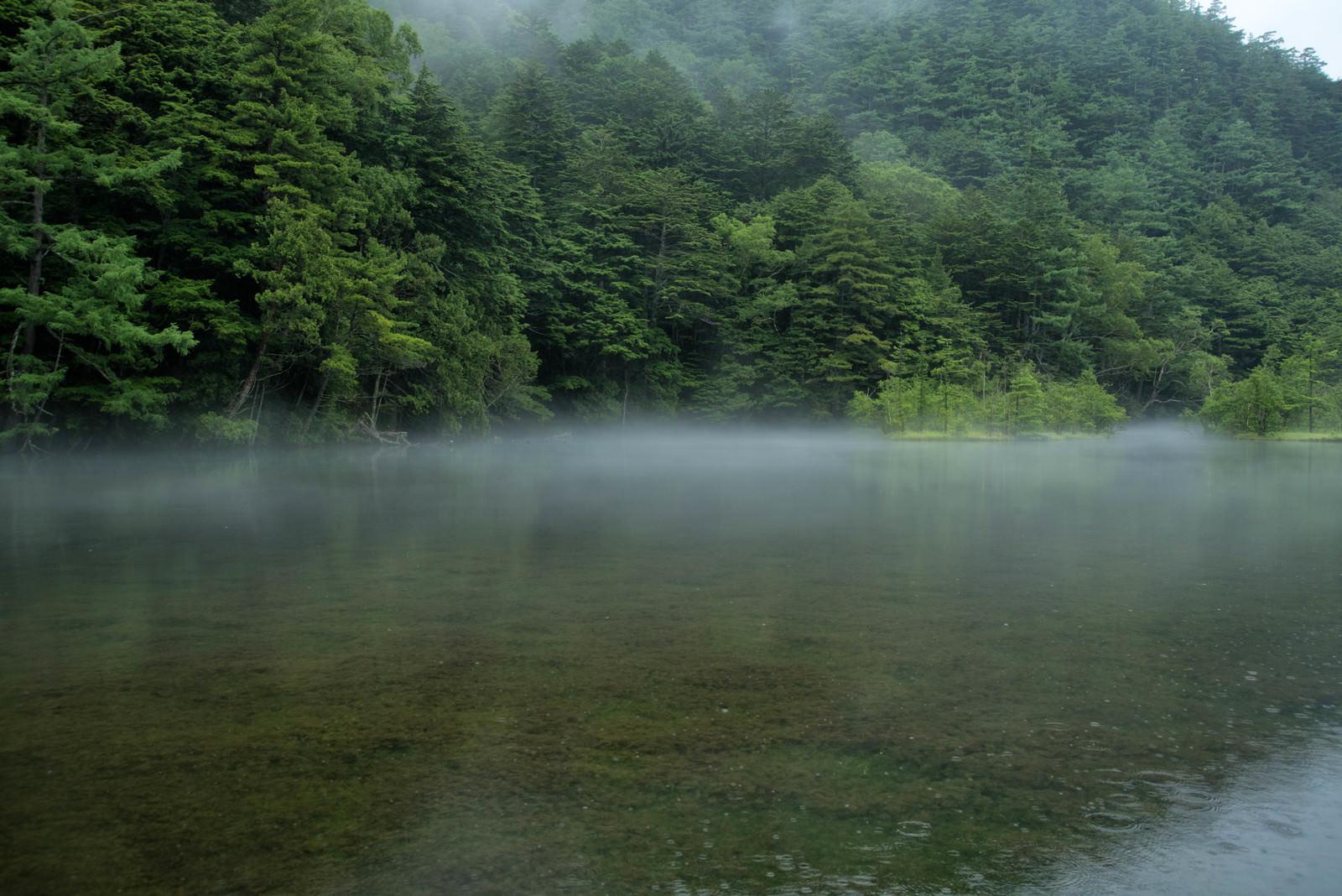 「雨降る明神池の水面に現れる霧(上高地)」の写真