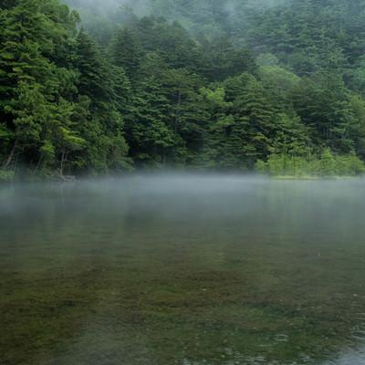 雨降る明神池の水面に現れる霧(上高地)の写真