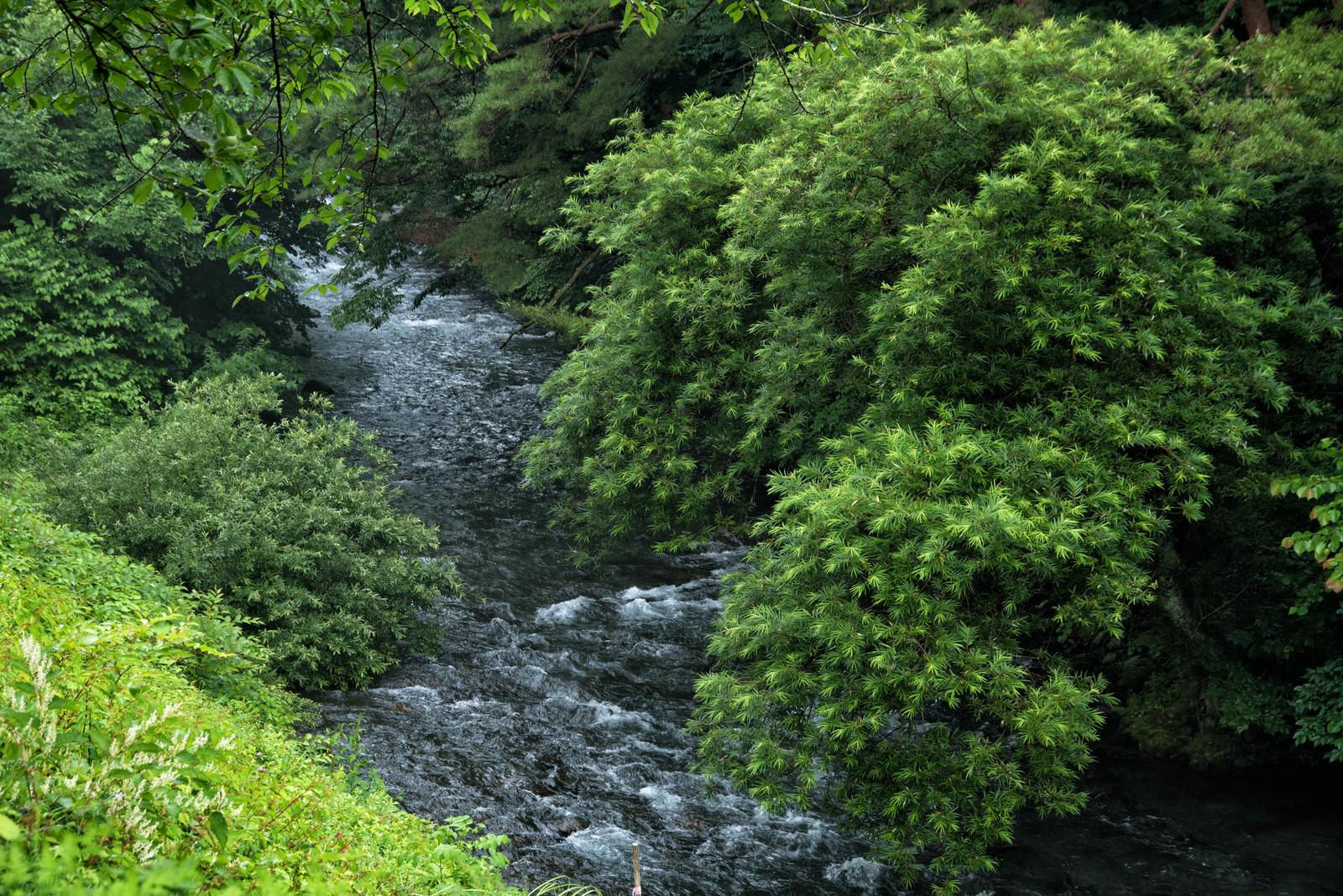 「新緑の下を流れる清流(島々谷)」の写真