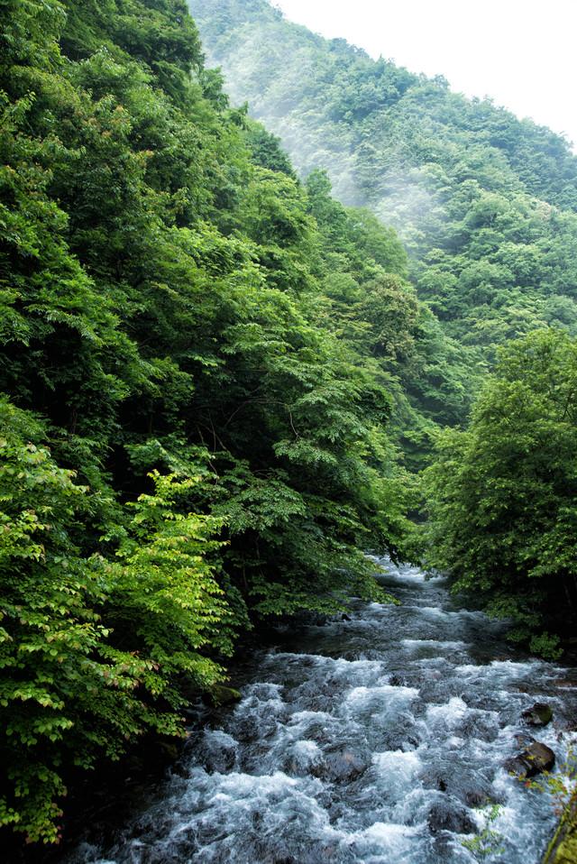 滔々と流れる島々谷の渓流の写真