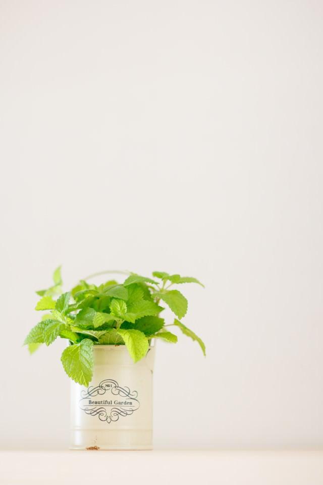 観葉植物とハーブの写真