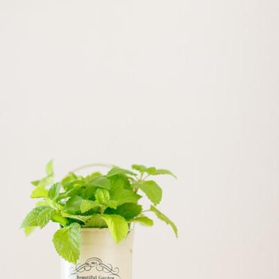「観葉植物とハーブ」の写真素材