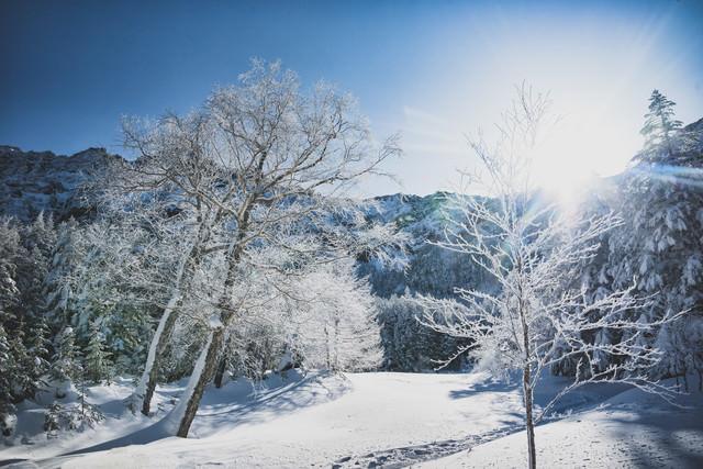 陽射しに照らされる樹氷の写真