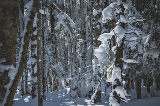 厳冬期の森に差し込む光の写真