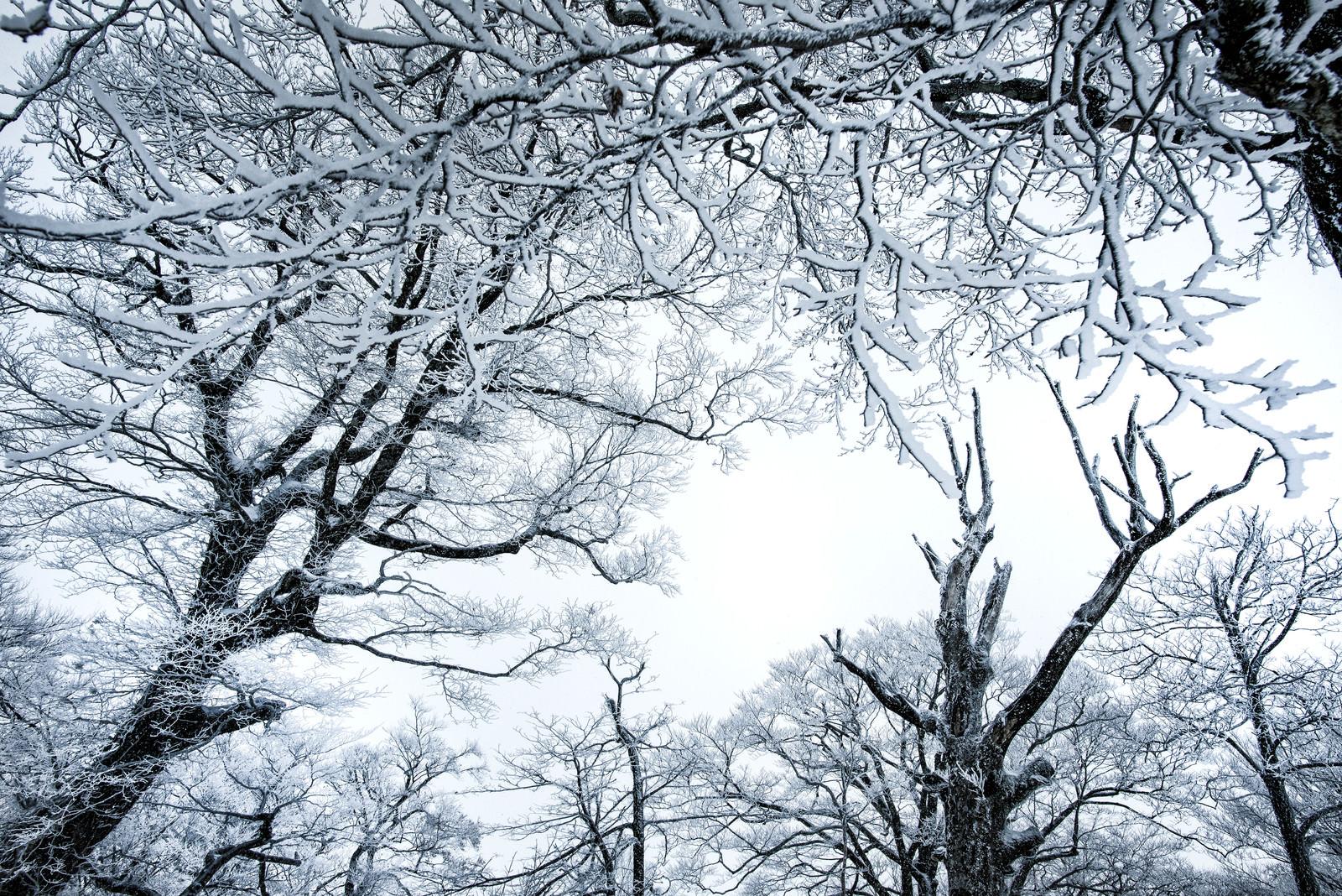 「降雪の森と積雪の木々」の写真