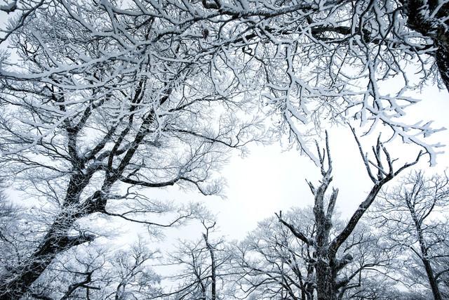 降雪の森と積雪の木々の写真