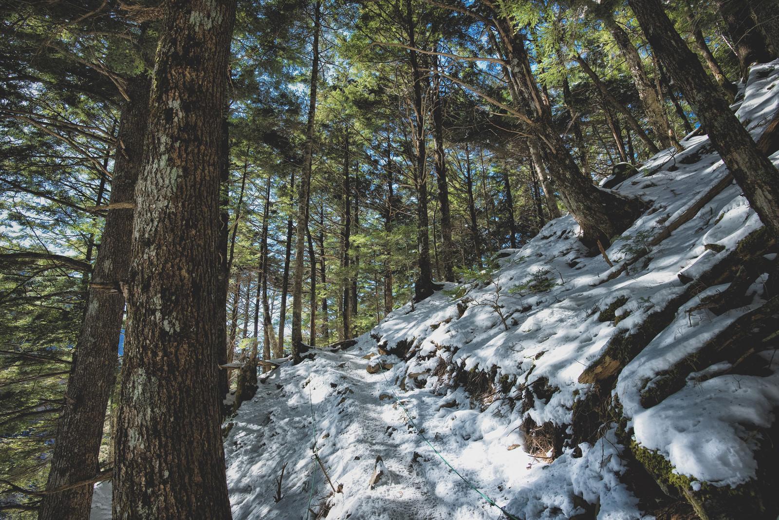 「残雪と木々の緑に降り注ぐ木漏れ日」の写真