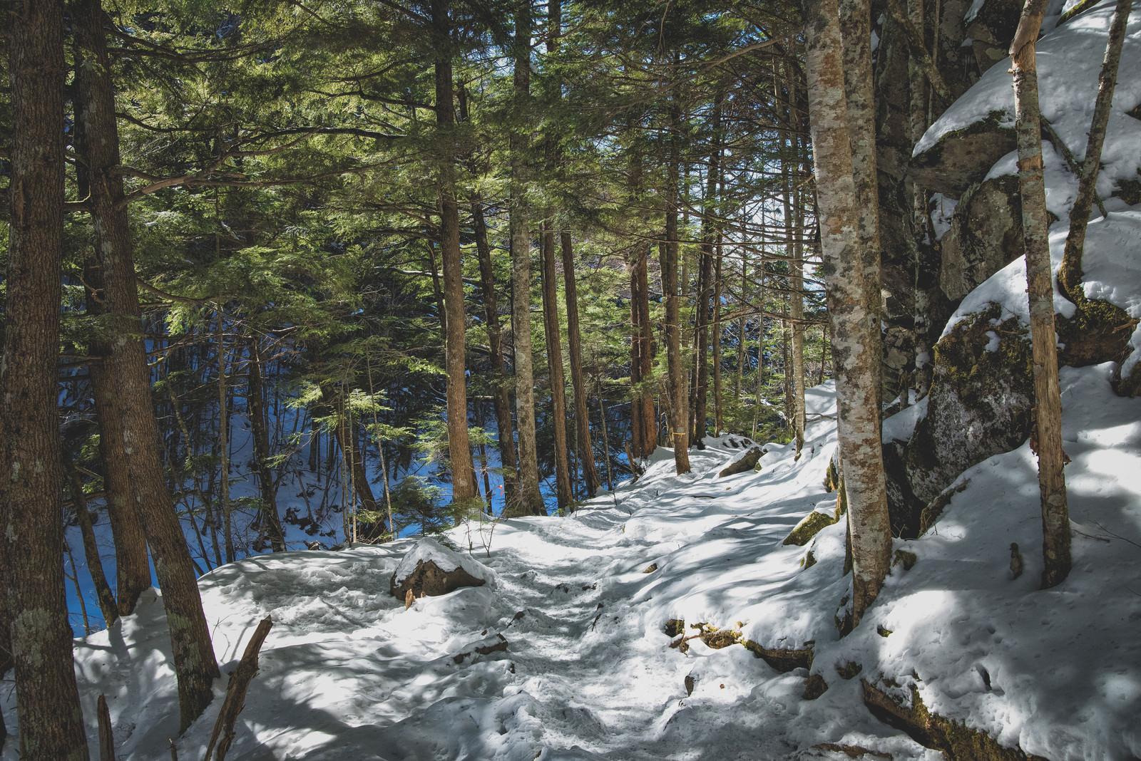 「木漏れ日さす残雪の森」の写真
