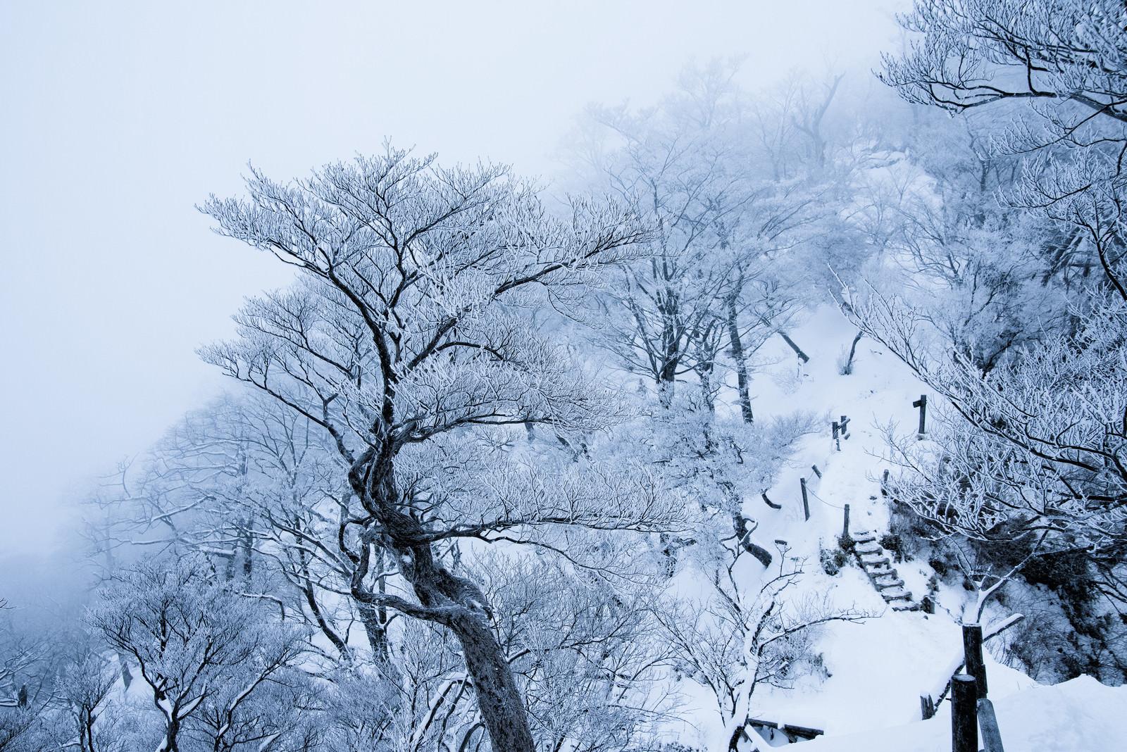 「丹沢の雪景色(神奈川県)」の写真