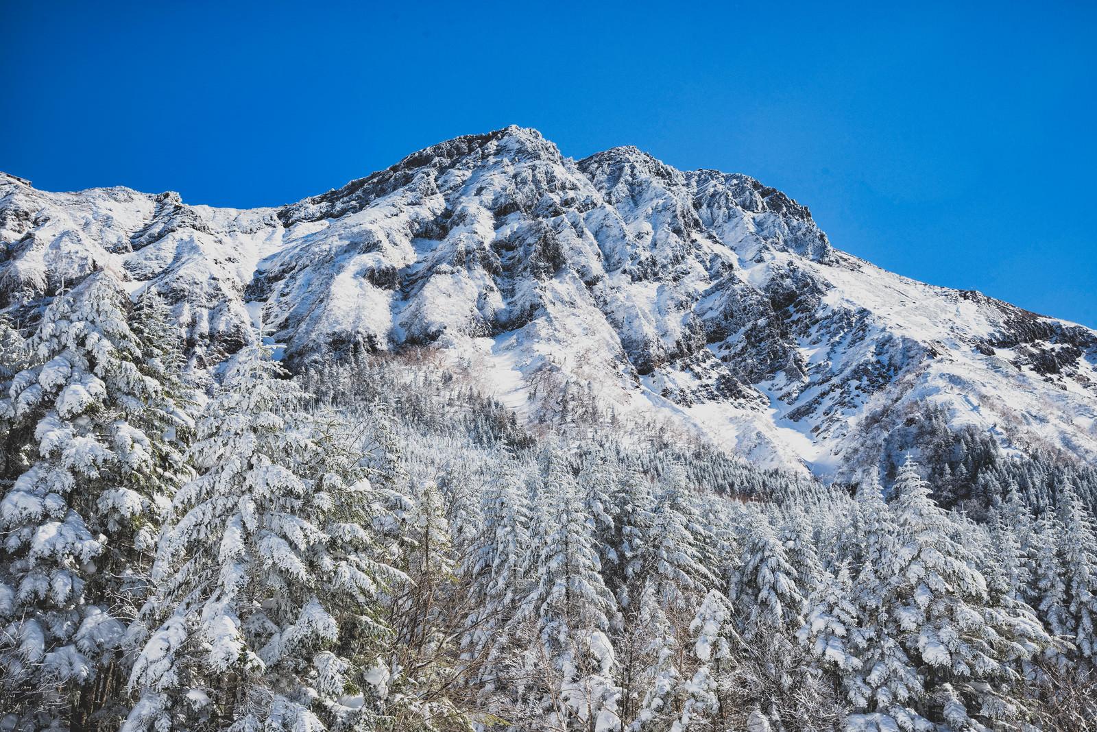 「凍り付く赤岳主稜と積雪の森」の写真