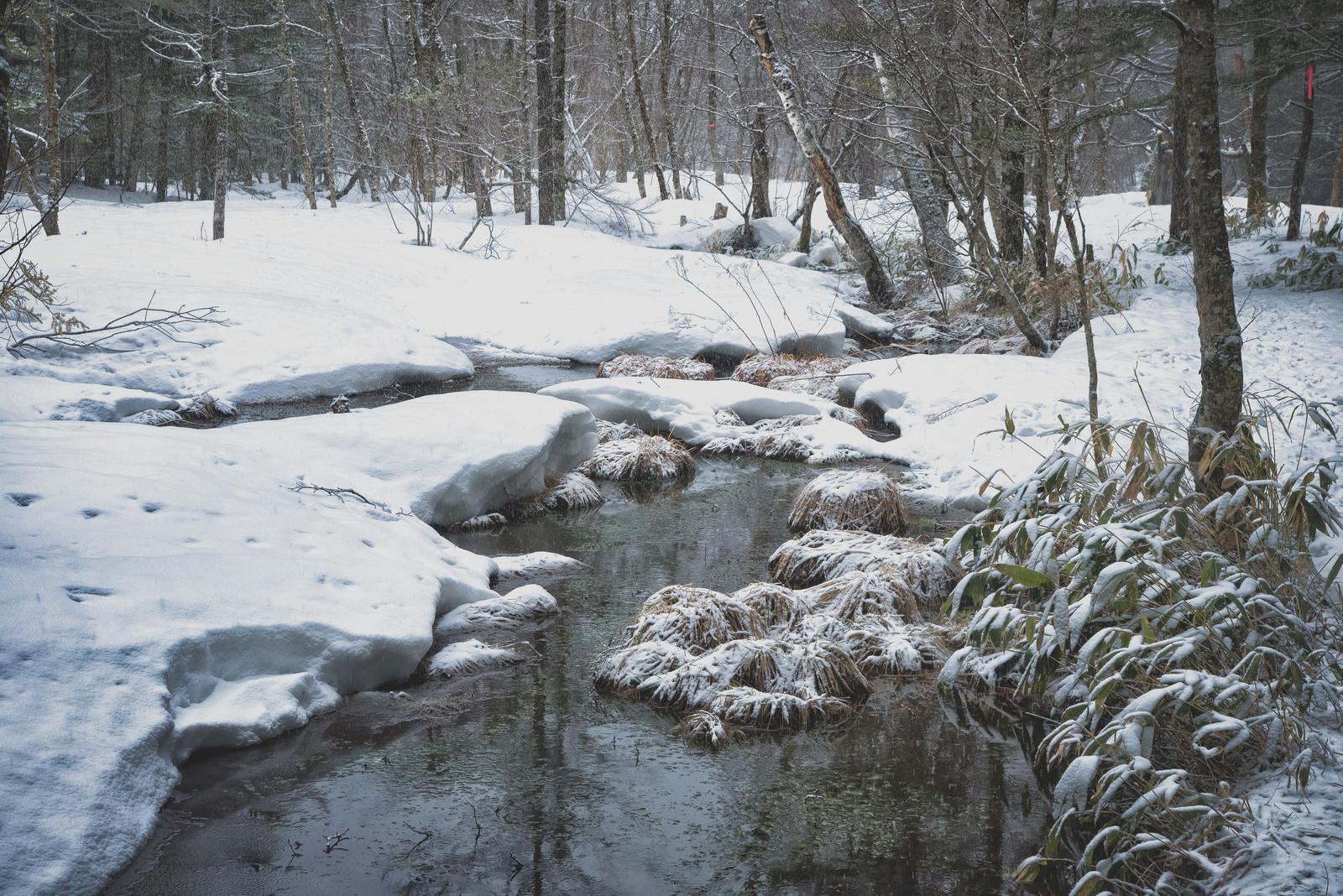 「雪深い冬の湿原(上高地)」の写真